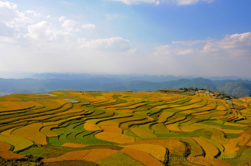 Guizhou, terraces, fields, view