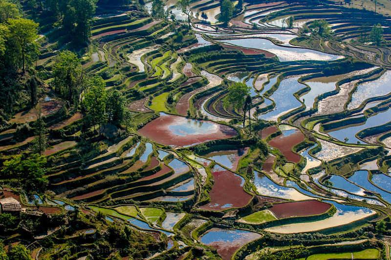 rice, Yunnan, terraces