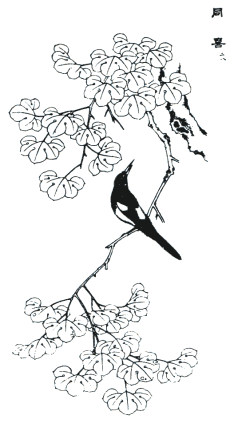 wood oil tree, magpie